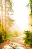 Forest road in the fog Royalty Free Stock Photos