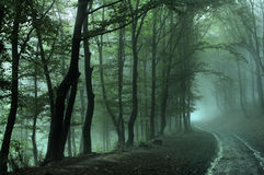 Forest road on foggy day