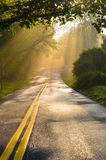 Forest road in the foggy morning with visible sun rays Stock Photo