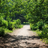 Forest, road, footpath Stock Photography