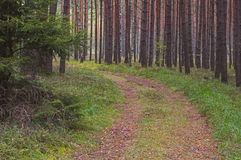 Forest road. Royalty Free Stock Photos