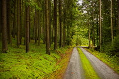 Forest road. Forest road in Czech countryside royalty free stock image