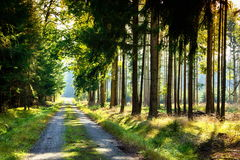 Forest road. Forest road in Czech countryside stock image