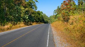 Forest road. Landscape in thailand Stock Photos