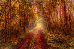 Forest road. Forset road goes to somewhere stock images