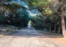 Forest road in frosty morning. In winter stock photography
