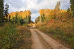Forest road in Golden autumn forest Stock Image
