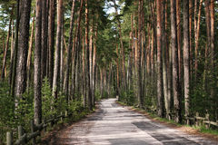 Forest road. Road in a green forest Royalty Free Stock Image