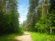 Forest Road. In the green forest Stock Photos