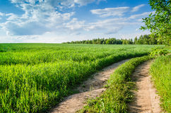 The forest road in a green field Royalty Free Stock Photo