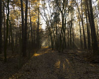 Forest road in a green foggy forest with sun rays in background Stock Images