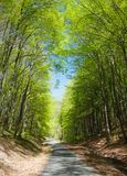 Forest road and green forest Royalty Free Stock Images
