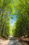 Forest road and green forest Stock Images