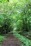 Forest Road. Green forest path with sun rays Royalty Free Stock Image