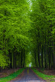 Forest road green spring Royalty Free Stock Photography
