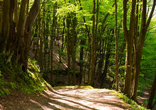 Forest road in green woods at sunshine Stock Photos