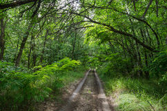 Forest road among the greenery Stock Image