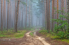 Forest Road. Stock Image
