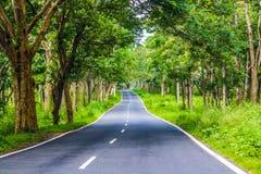 Forest Road i den Bandipur nationalparken Arkivbild