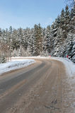 Forest Road i vinter Royaltyfri Foto