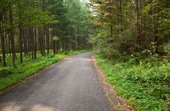 Forest road. With impressive trees,china Royalty Free Stock Image