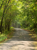 Forest road. With impressive trees,china Royalty Free Stock Photos