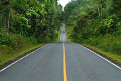 Forest road at Khaoyai National Park Royalty Free Stock Photo