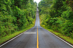 Forest road at Khaoyai National Park, Thailand Royalty Free Stock Image