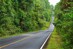 Forest road at Khaoyai National Park, Thailand Royalty Free Stock Photography