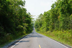 Forest road at Khaoyai National Park (The World Heritage of natu Stock Images