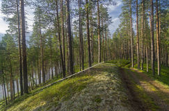 Forest road on a lake shore Stock Image