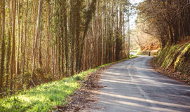 Forest road landscape with couple riding motorbike Stock Images