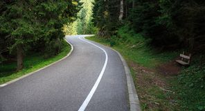 Forest road. Landscape Royalty Free Stock Photos