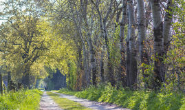 Forest road. Landscape in Germany Stock Image