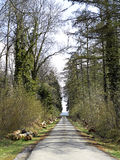 Forest road. Landscape. Stock Photo