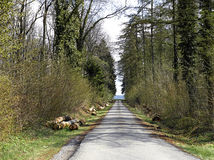 Forest road. Landscape. Stock Images