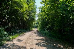 Forest road. Landscape. Idyllic landscape with fresh green meadows and blooming flowers and mountains in the background. Forest road. Landscape Royalty Free Stock Photo