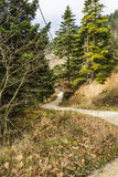 Forest Road Landscape Royalty Free Stock Image