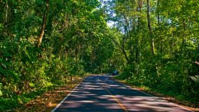 Forest road. Landscape in thailand Royalty Free Stock Photography