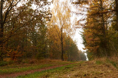 Forest road leading through the forest at fall. Forest road leading through the forest in autumn with colorful golden leaves Stock Photo