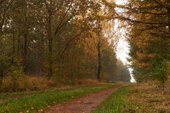 Forest road leading through the forest at fall. Forest road leading through the forest with golden leaves in autumn Royalty Free Stock Image