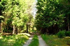 Forest. Road leading to the fairy tale royalty free stock photography