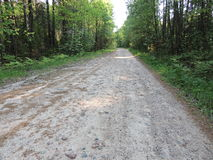 Forest road. Forest sand rocky road receding into the distance Stock Photos