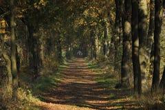 Een bosweg in het park Royalty Free Stock Image