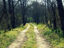 Forest road. With lonely trees in the spring Royalty Free Stock Photo