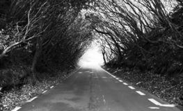 A forest road in Mauritius royalty free stock photos