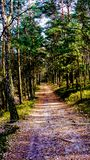 Forest road in Mazovian Landscape Park. Path in forest in Mazovian Landscape Park located in neighbour of Warsaw. Photo in smartphone wallpaper format, taken in Stock Image