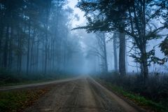 Forest road at the misty autumn morning. stock photos