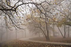Forest road on a misty autumn morning in Kosutnjak, Belgrade Royalty Free Stock Images