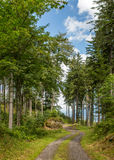 Forest road in mountains Stock Photos